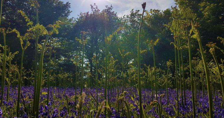 Hembury Woods Walk – Hidden Walks In Devon