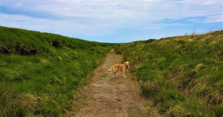 6 Basic Essentials To Take Hiking
